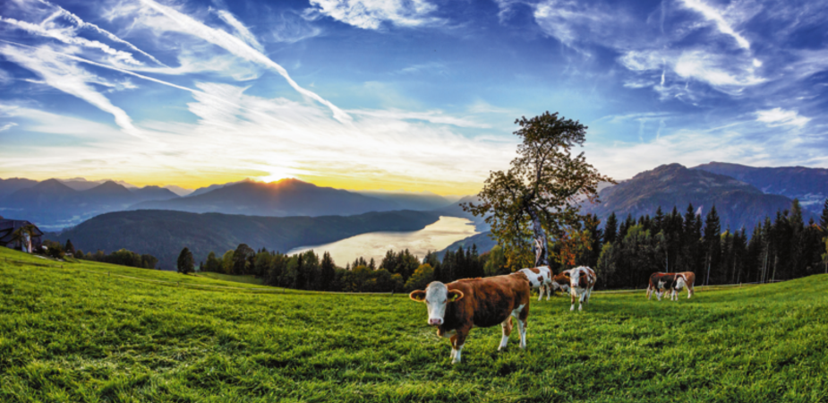 Lake Millstatt Herd Of Cows Sunset © René Pi/Pyranha - Fotolia